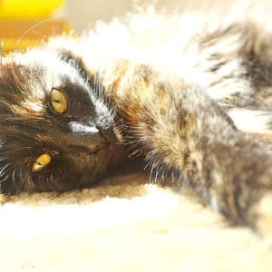 Pet Photography 14